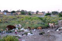 وضعیت اسفناک منطقه کوی آریا خرمشهر