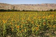زراعة ما يزيد عن 88 ألف هكتار من فول الصويا والسمسم وعباد الشمس