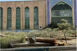 ۱۲ درخت در مهریز با دستور قضائی قطع شد