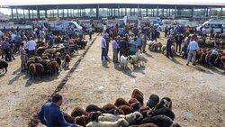 بازار خرید و فروش دام در ترکیه در آستانه عید سعید قربان