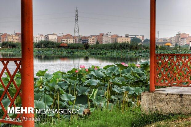 در ایران نیلوفر، نماد ایزدبانوآناهیتابودهاست. در اساطیر یونان، ایزدبانوآفرودیتو در اسطورههای هند، ایزدبانولاکشمیبا این گل پیوند دارند. در برخی روایتهای اسطورهای،میترادر میان گل نیلوفر زاده میشود.