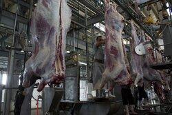 ممنوعیت کشتار دام آبستن در کشتارگاههای دام لرستان