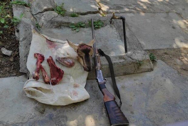 شکارچیان بز کوهی در الشتر دستگیر شدند