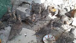تاراج حیات وحش در یک کارخانه متروک/۴۰ پرنده وحشی کشف شد