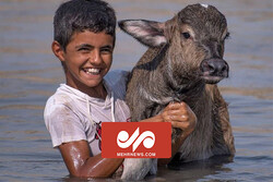 شادی نوجوان خوزستانی از رسیدن آب به گاومیشها