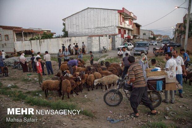 İranlı Türkmenler Kurban Bayramı'nı coşkuyla kutluyor