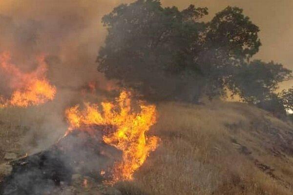 وقوع آتش سوزی گسترده در جنگلهای بوزین و مرهخیل پاوه