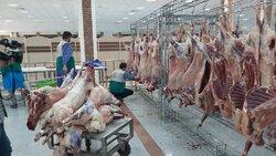 قربانی ۱۱۰گوسفند توسط خادمیاران رضوی کرمانشاه به مناسبت عید قربان