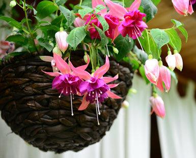 با خرید گل و باکس گل رز جاودان دکور منزل را دگرگون کنید