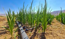 تغییر کاربری زمین های کشاورزی در شرق اصفهان ممنوع است