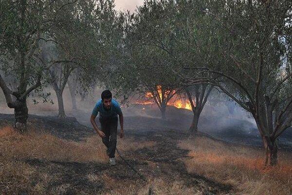 جنگل ها و مراتع منطقه دیل گچساران در آتش می سوزد