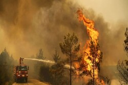 Erdogan gives disaster zone status for fire-affected regions