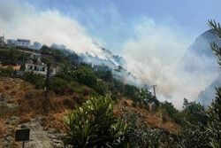 Hatay'da yangın: Alevler evlere sıçradı
