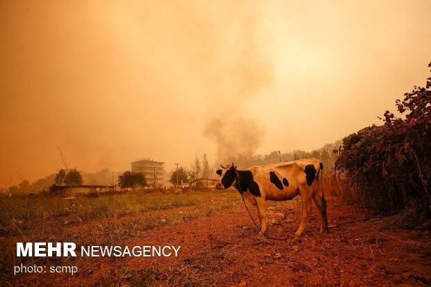 فاجعه آتش سوزی در ترکیه