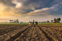 Agricultural problems of India and its effect on import