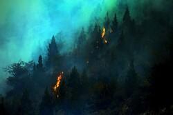 Türkiye'de orman yangınları devam ediyor