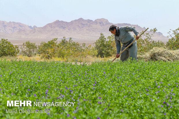 سایت پرورش گورخر ایرانی در یزد