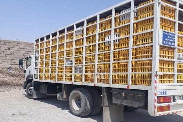 توقیف میلیاردی مرغ زنده فاقد مجوز حمل در قزوین