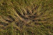 تصاویری از شالیزارهای خشکیده در گلستان