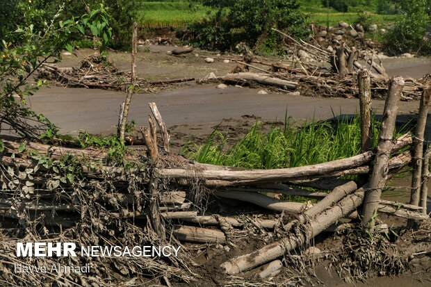 سیل علاوه بر تخریب شالی ها باعث شده زمین های کشاورزی در سال اینده هم قابل کشت نباشند.