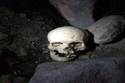 کشف جمجمه انسان توسط حفاران غیرمجاز در بافت