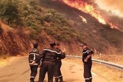 Cezayir'de orman yangını: 4 ölü, 3 yaralı