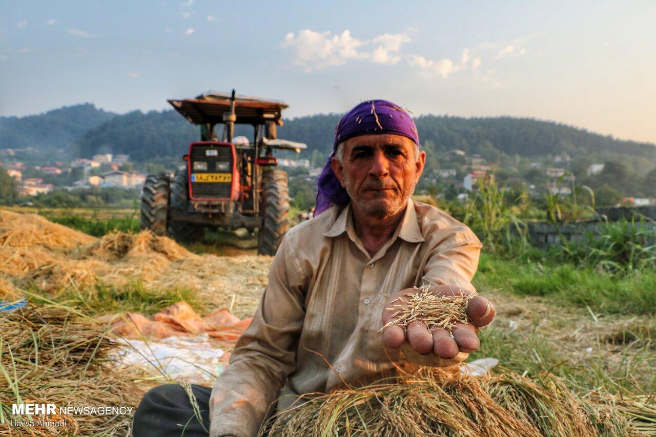پشت پردههای بازار برنج/ هدف از واردات مازاد بر مصرف چیست؟