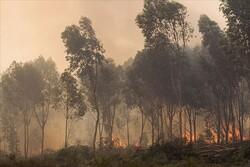 Tunus'taki orman yangınlarında 450 hektarlık alan kül oldu