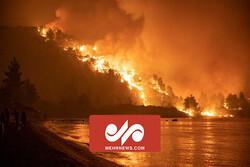 یونان میں آتشزدگي میں بڑے پیمانے پر حیوانات کی ہلاکت