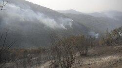 خسارت آتش به ۱۵۰ هکتار از جنگلهای جهاننما/ مه شدید بر منطقه حاکم شد