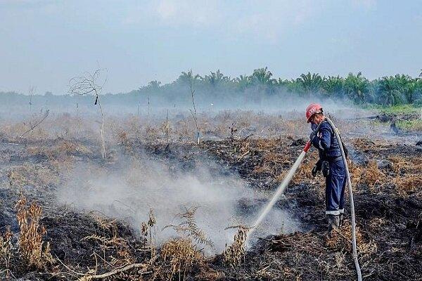 Türkiye'de 2021'de yanan ormanlık alan miktarı geçen yıllara göre yüzde 755 arttı