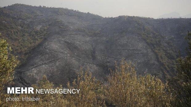 تجدد الحريق بغابات القدس والنيران تشتعل بـ20 ألف دونم
