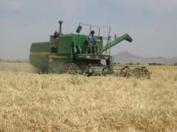 کاهش ۶۲ درصدی تولید گندم در کردستان