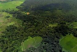 اما و اگرهای تاریخی بودن یک جنگل در گیلان/ «فتاتو» در پیچ و خم تعارض دو دستگاه