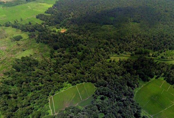 تعرض به تنها جنگل جلگهای هیرکانی در گیلان