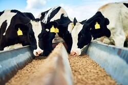 انتقاد از مطرح کردن واردات گوشت قرمز به کشور/ صادرات شیرخشک، بازار داخل را تنظیم می کند
