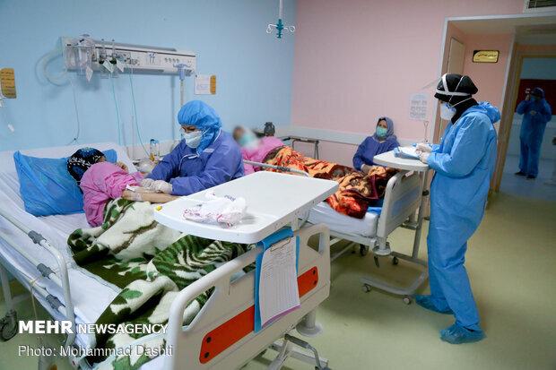 ۵۹۴ بیمار در بخشهای کرونایی بوشهر بستری هستند/ ثبت ۹ فوتی جدید
