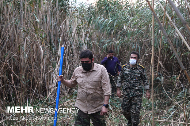 Forces mobilized to extinguish wildfire of Anzali Lagoon