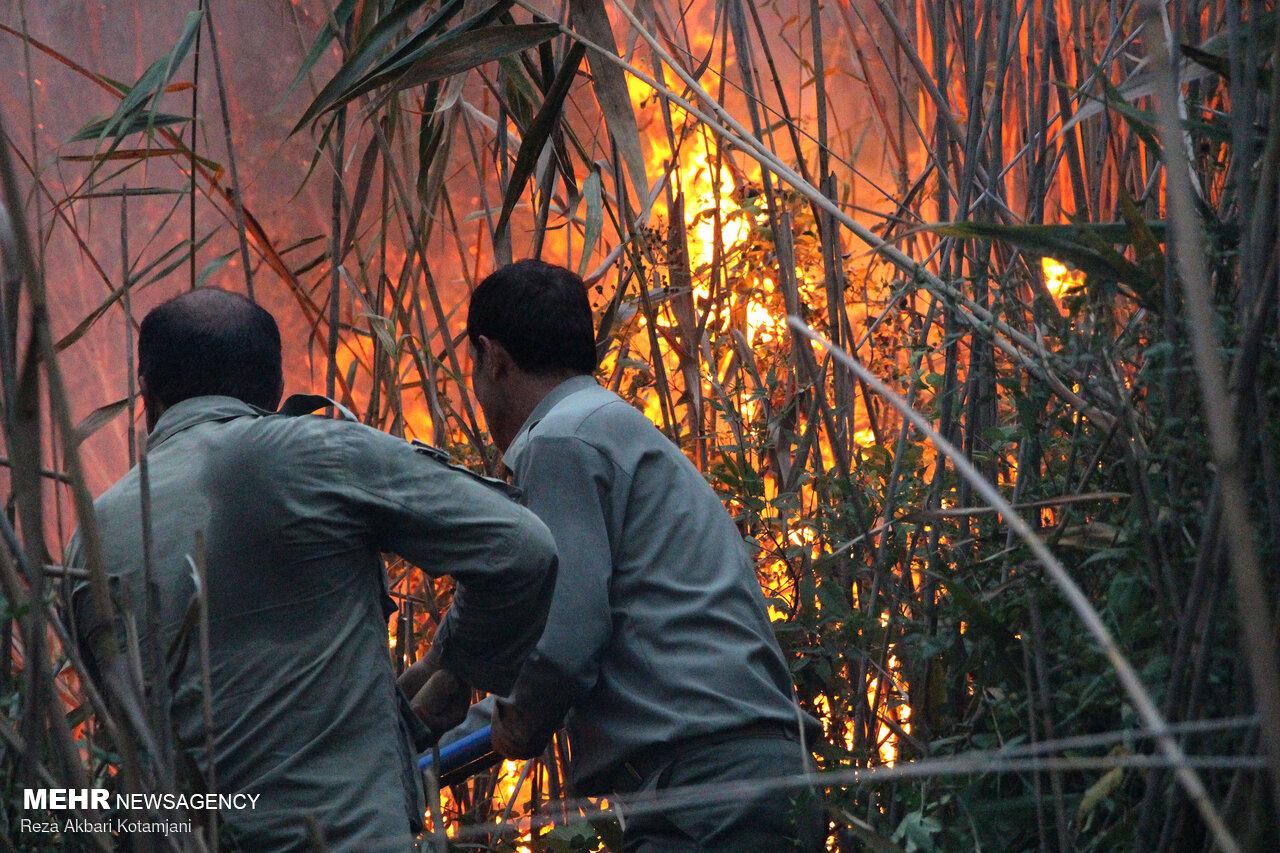 جدال مکرر آتش و نیزار/ شعلههای طمعی که به قصد تصرف زبانه کشید