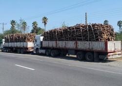 کشف ۵۵ تن انواع چوب جنگلی قاچاق در شهرستان رودسر