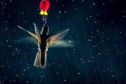 عکسهای زیبای برنده مسابقه عکاسی از پرندگان
