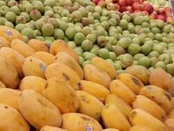 قیمت انواع میوه های پاییزی در میادین میوه و تره بار اعلام شد