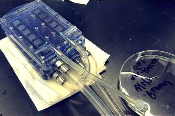 تولید کلیه زیستی مصنوعی که جایگزین دیالیز میشود