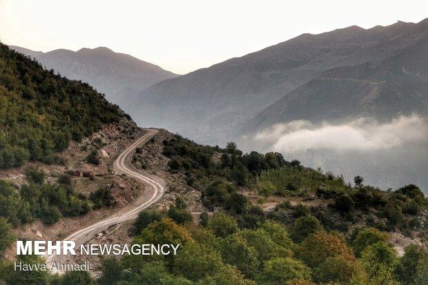گردوچینی در مازندران
