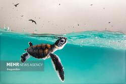 برترین تصاویر عکاسی اقیانوس ۲۰۲۱