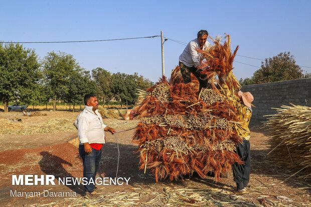 Traditional broom making in Khorasan