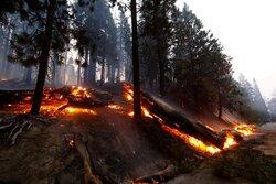 تلاش ماموران برای جلوگیری از سوختن جنگل ملی سکویا