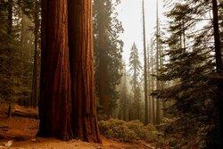 تخمین ذخیره کربن جنگلها با دادههای ماهواره ای/ مدیریت مسائل زیست محیطی با فناوری سنجش از دور