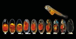 برندگان مسابقه عکاسی میکروگرافی جهان کوچک ۲۰۲۱