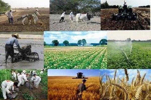 هدفگذاری تولید بیش از نیم میلیون تن محصولات استراتژیک کشاورزی